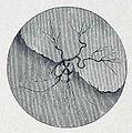 Die Gartenlaube (1884) b 095 4.jpg