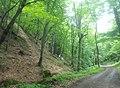 Dilijan National Park, Path way to Aghavnavank 34.jpg