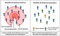 Distanza metrica e distanza topologica nei gruppi animali.jpg