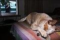 Dog television.jpg