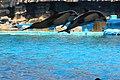 Dolphin show - Nagoya Aquarium - Japan (15863337022).jpg