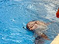 Dolphins (7980898745).jpg