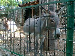 Donkeys in Split ZOO.jpg