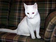Artemis Wikipedia La Enciclopedia Libre