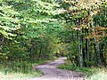 Down the Forest Road - panoramio.jpg