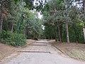 Drvece u parku (6).jpg