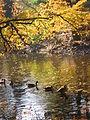 Ducks in Lorimer Park.jpg