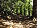 Dunkeld, The Hermitage, path, 02.jpg