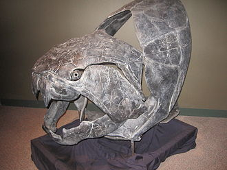 Sam Noble Oklahoma Museum of Natural History - Image: Dunkleosteus Sannoble