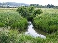 Dyke on Brading Marsh - geograph.org.uk - 484526.jpg