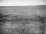 ETH-BIB-Fliehende Wildebeest (Gnus)-Kilimanjaroflug 1929-30-LBS MH02-07-0346.tif
