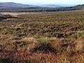 East Kielder Moor - geograph.org.uk - 1546747.jpg