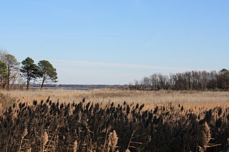 Eastern Neck National Wildlife Refuge - A view to the south from the Duck Inn trail