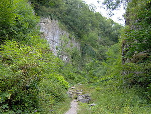 Ebbor Gorge - The path into the gorge