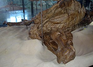 Trachodon mummy - The Trachodon mummy on exhibit in the American Museum of Natural History (2008)