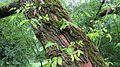 Ein Baum aus welchem neues Leben sprießt.jpg