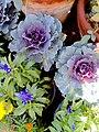 El Zohour Showroomمعرض الزهور بحديقة الاورمان 7.jpg