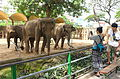 Elephas maximus - Saigon Zoo and Botanical Gardens - Ho Chi Minh City, Vietnam - DSC01327.JPG