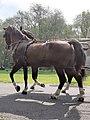 Em - Equus caballus - 51.jpg