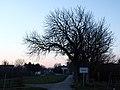 Evening in December (15400590803).jpg