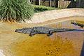 Everglades (12561344465).jpg
