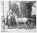 Ewe Meets Lamb Drawing.jpg