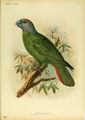 The Martinique amazon, Amazona martinicana, is an extinct species of parrot in the family Psittacidae.