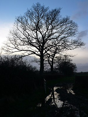 English: Fading light at Glanvilles Wootton A ...