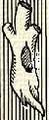 Fatörzs (heraldika).PNG