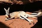 Fauna de Australia30.JPG