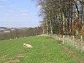 Field-woodland boundary - geograph.org.uk - 394066.jpg