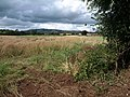 Field near Fulford - geograph.org.uk - 1463535.jpg