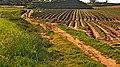 Fields of Gan Shlomo, Shfelah , Israel שדות קבוצת שילר, שפלת יהודה - panoramio (2).jpg