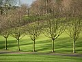 Five trees - geograph.org.uk - 1142474.jpg