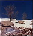 Flickr - Government Press Office (GPO) - Northern Scene on Mount Hermon.jpg