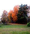 Flickr - Per Ola Wiberg ~ mostly away - Autumn.jpg