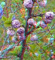 Flickr - jimf0390 - JimF 04-19-10-0009a blossoms.jpg