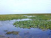 Freshwater marsh in Florida