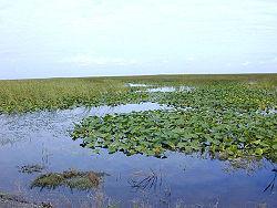 مانداب آب شیرین در فلوریدای آمریکا