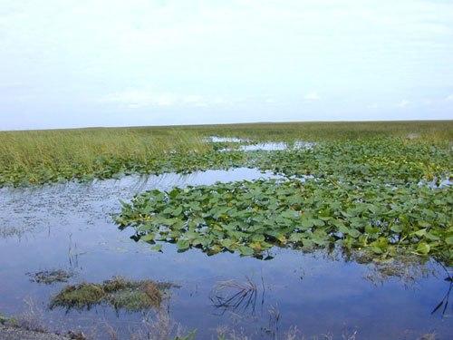 Florida freshwater marshes usgov image
