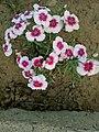 Flower.14.jpg