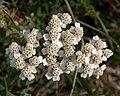 Flower on Djurgarden (52354).jpg