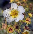 Flowers of Ireland (8183911142).jpg