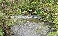 Fluß Lauter in Dettingen - panoramio.jpg