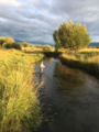 Flyfisherman on Fox Creek, Teton River tributary.png
