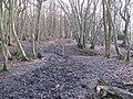 Footbridge in West Wood - geograph.org.uk - 1704104.jpg