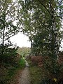 Footpath through Marsham Heath - geograph.org.uk - 1018271.jpg