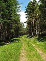 Forest Track, Glenhead Plantation - geograph.org.uk - 498213.jpg