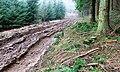 Forest Track, Silton - geograph.org.uk - 298009.jpg