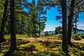 Forest area at Fjärdlång, Stockholm (Sweden) - panoramio.jpg